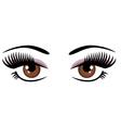 Eye brown vector