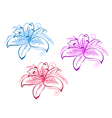 Lily flower set vector
