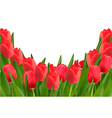 Holiday background with bouquet of red flowers vector