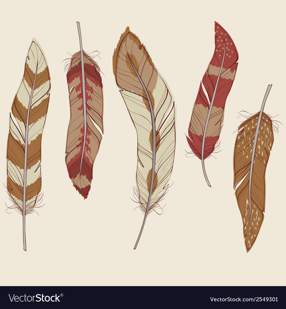 Colorful set of different feathers vector | Price: 1 Credit (USD $1)