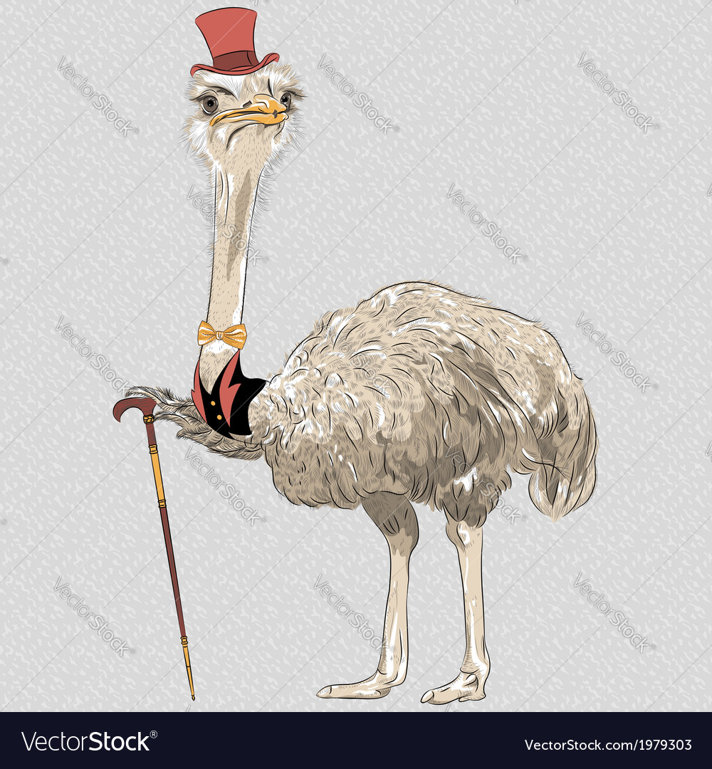 Funny ostrich bird hipster i vector | Price: 1 Credit (USD $1)