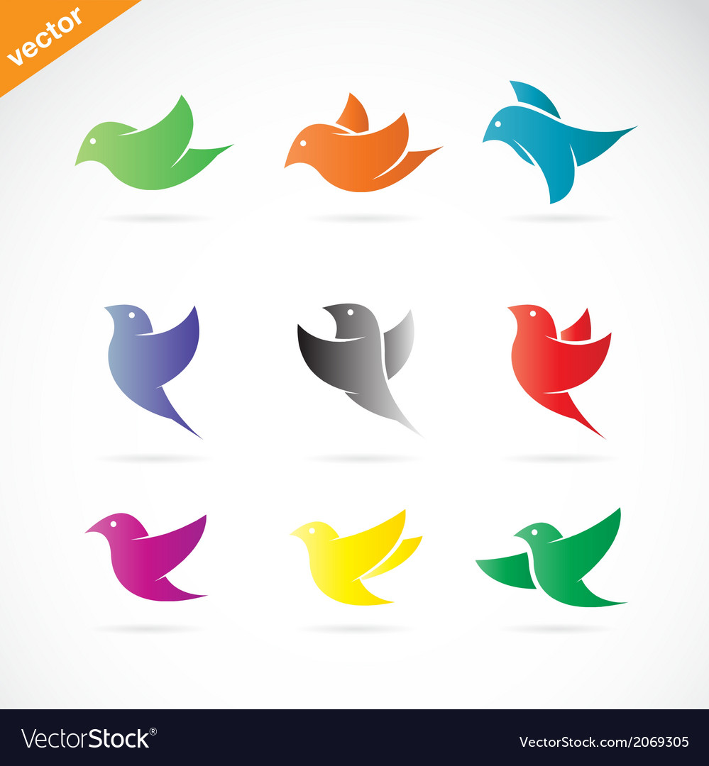 Group of colorful bird vector | Price: 1 Credit (USD $1)