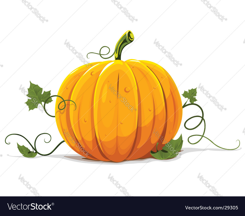 Pumpkin vegetable fruit isolated vector | Price: 1 Credit (USD $1)