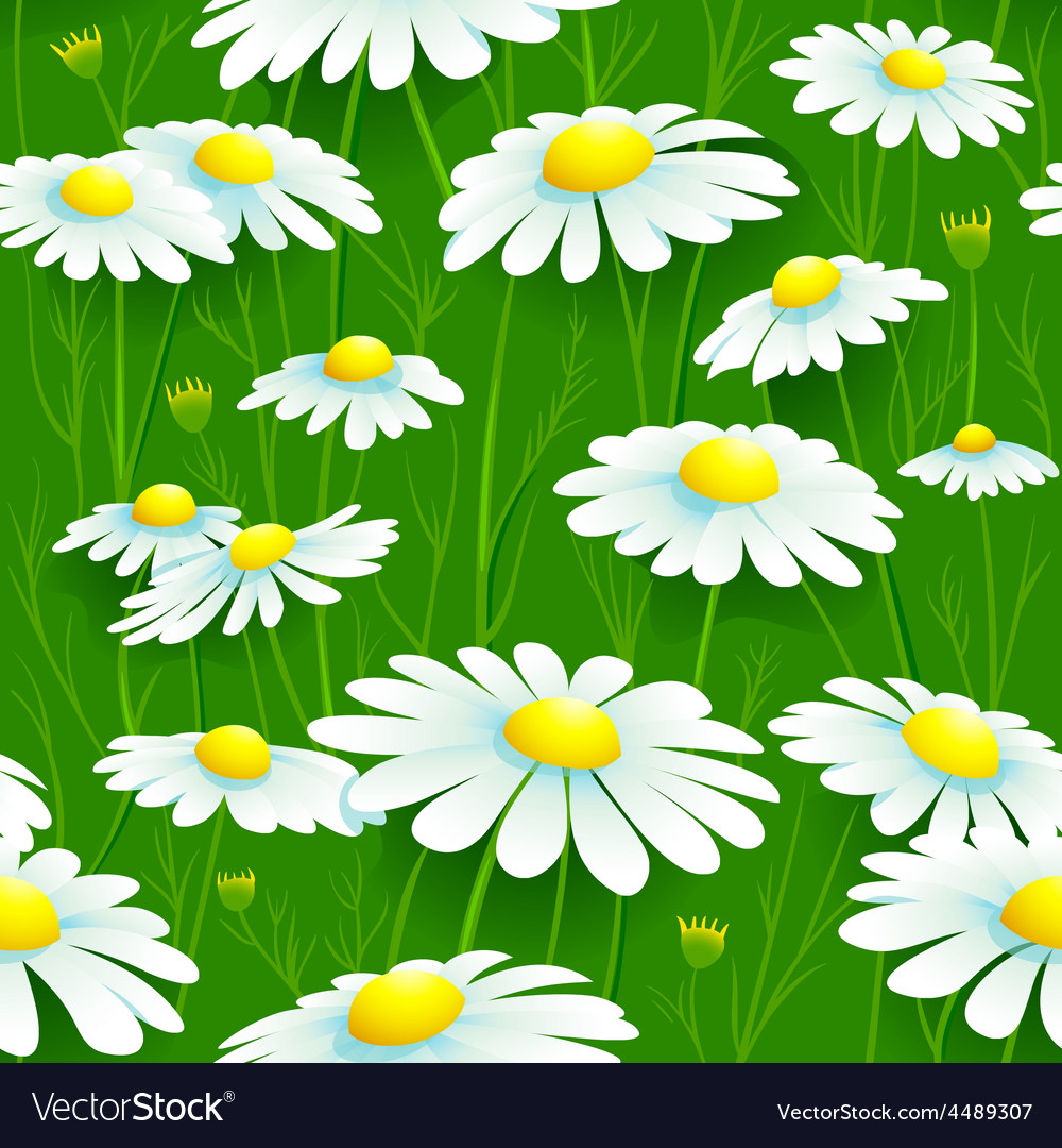 Camomiles seamless pattern vector | Price: 1 Credit (USD $1)
