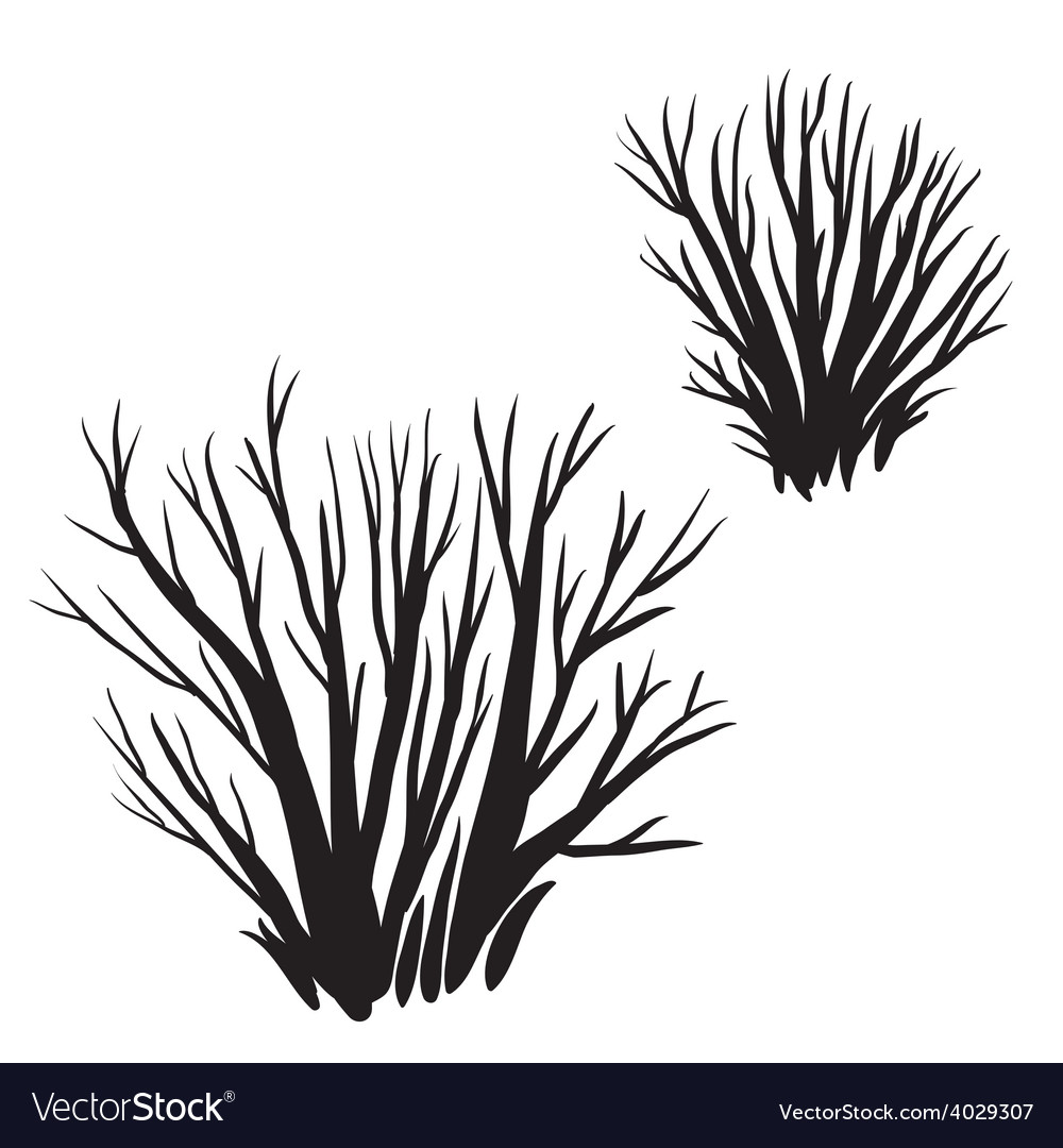 Drawing of the bush vector | Price: 1 Credit (USD $1)