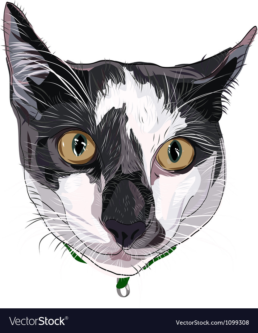 Hand drawn kitty face white grey vector | Price: 1 Credit (USD $1)