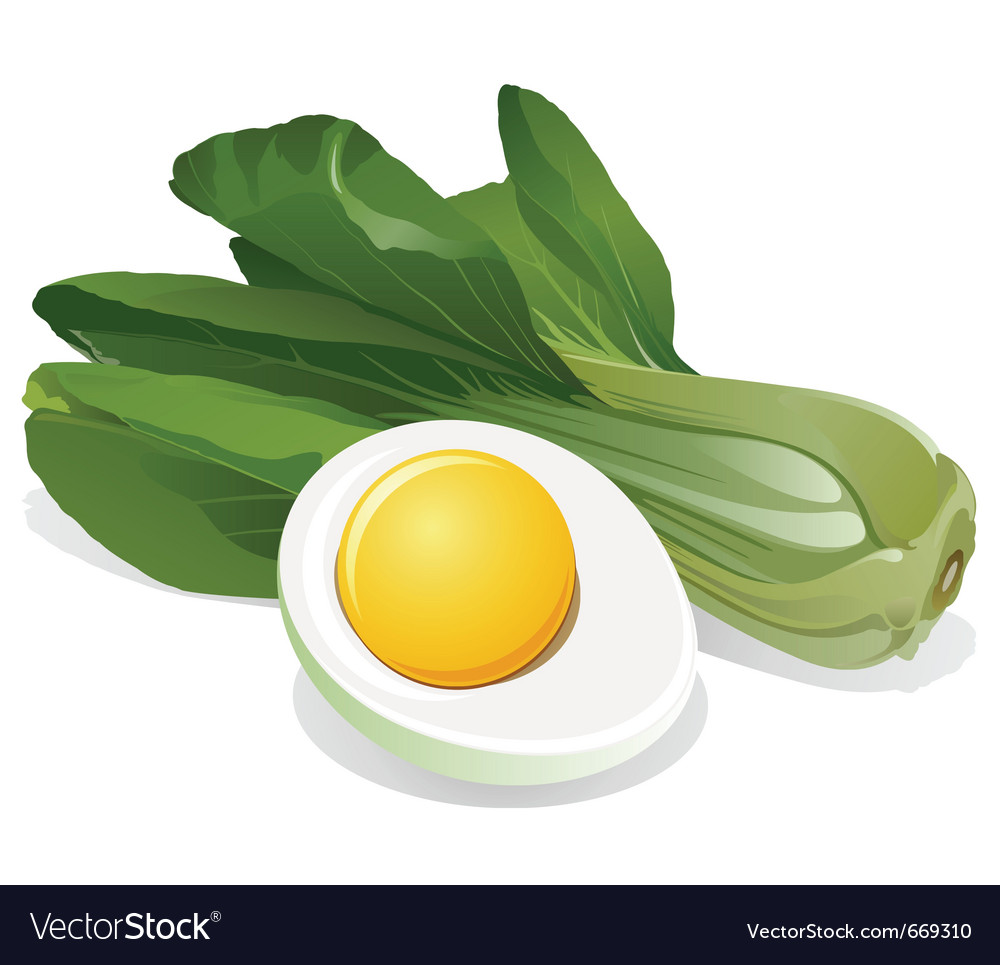 Cabbage salad with sliced egg vector | Price: 3 Credit (USD $3)