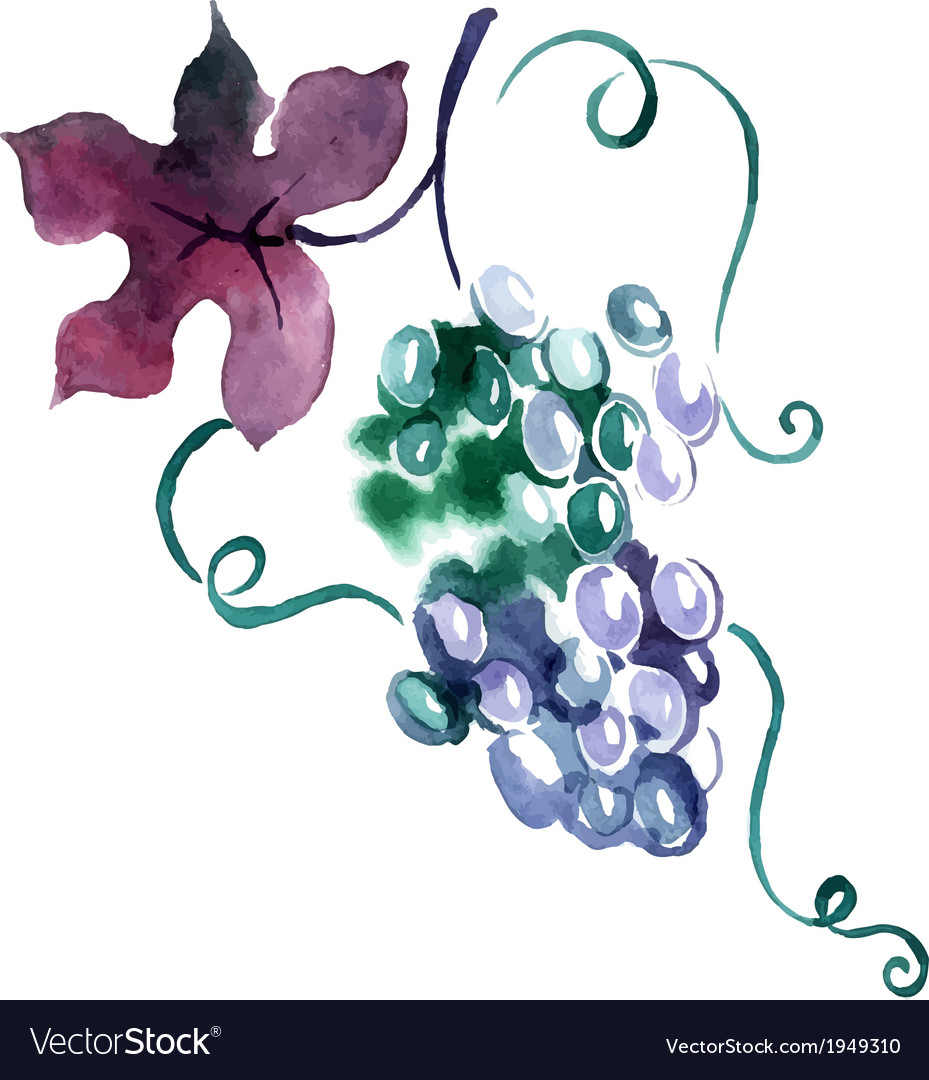 Painted watercolor grape vector | Price: 1 Credit (USD $1)