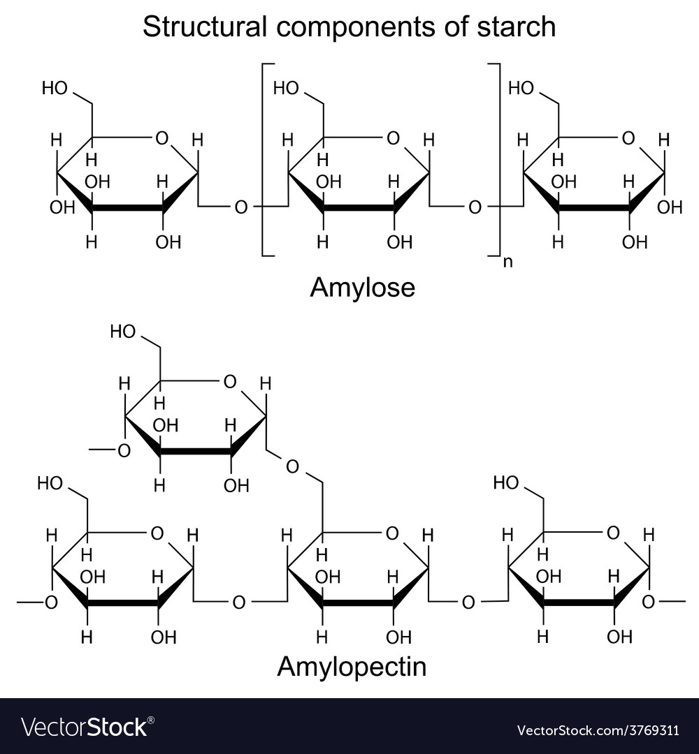 Structural components of starch -chemical formulas vector | Price: 1 Credit (USD $1)