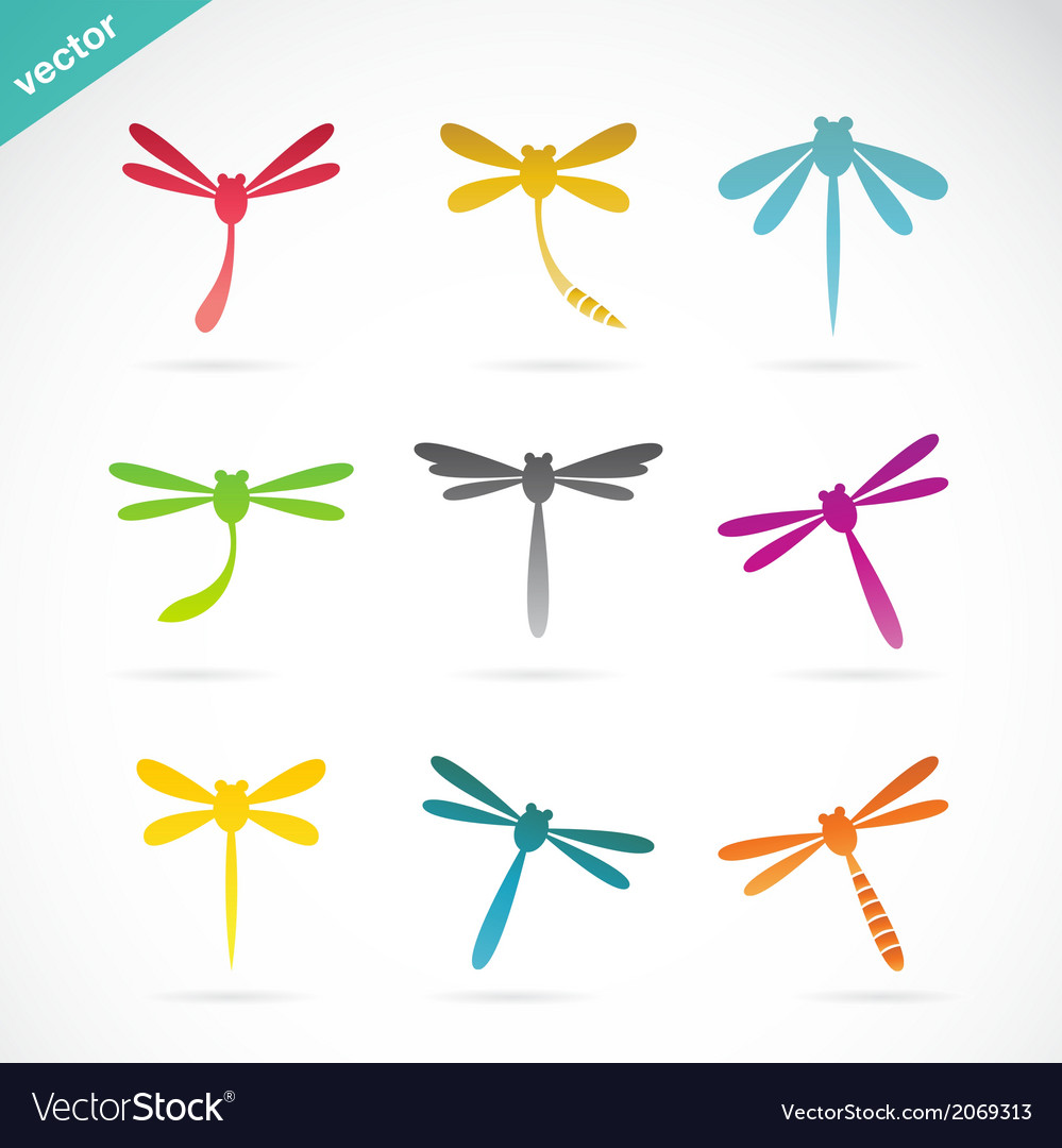 Group of colorful dragonfly vector | Price: 1 Credit (USD $1)