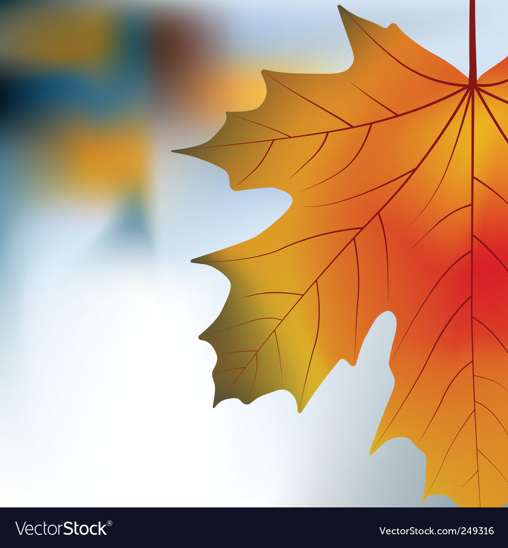 Red yellow maple autumnal background vector | Price: 1 Credit (USD $1)