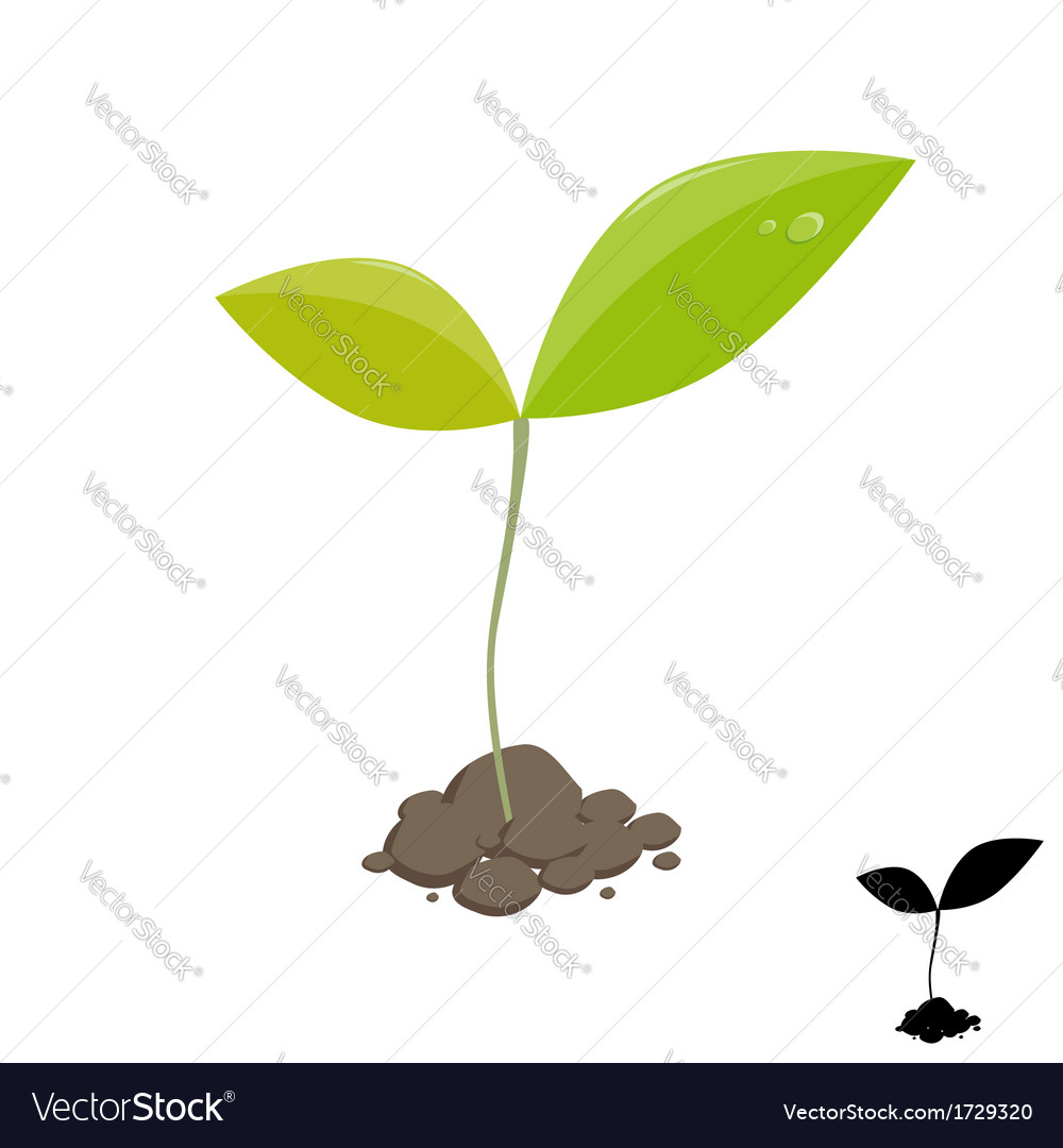 Little plant sprout vector | Price: 1 Credit (USD $1)