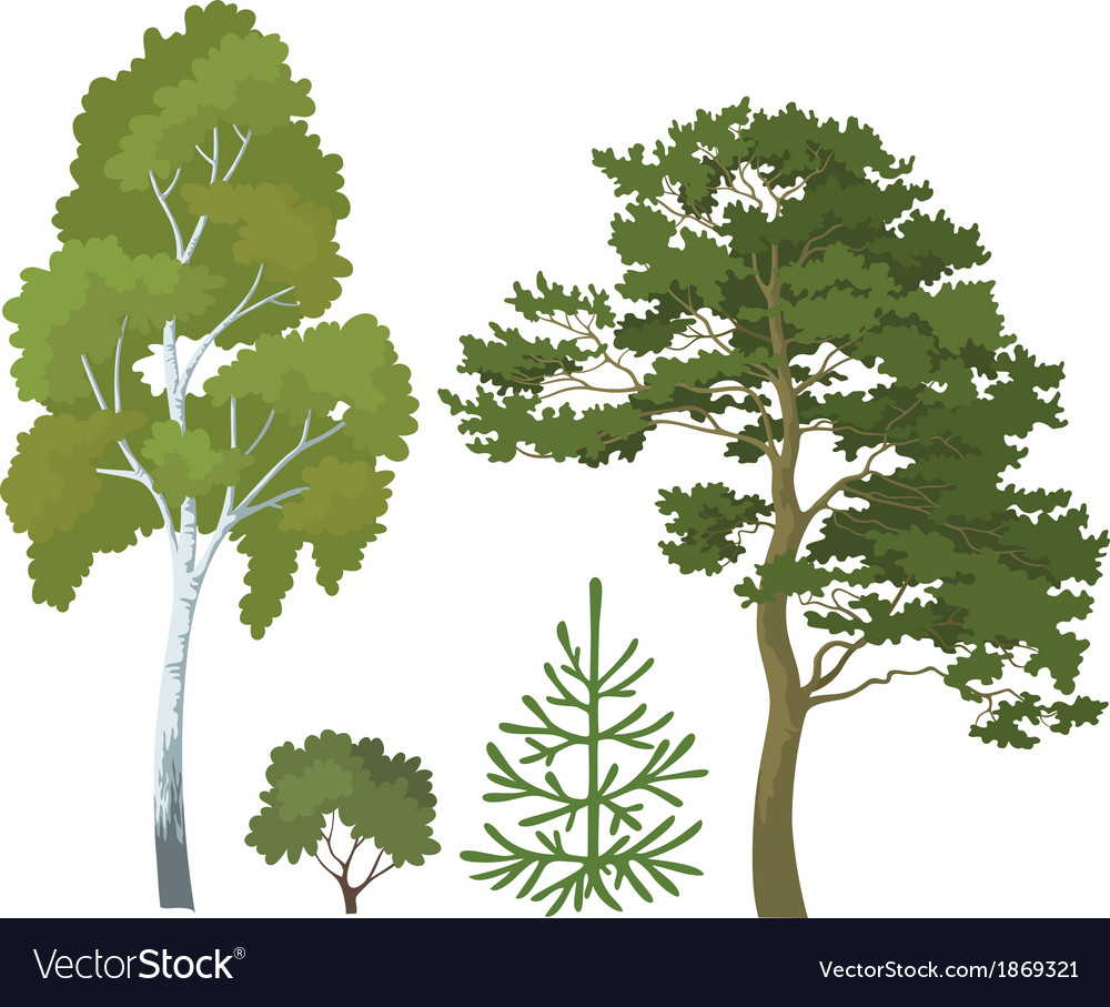 Forest plants set vector | Price: 1 Credit (USD $1)