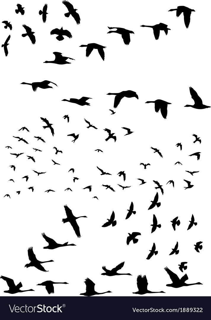 Birds in flight vector | Price: 1 Credit (USD $1)