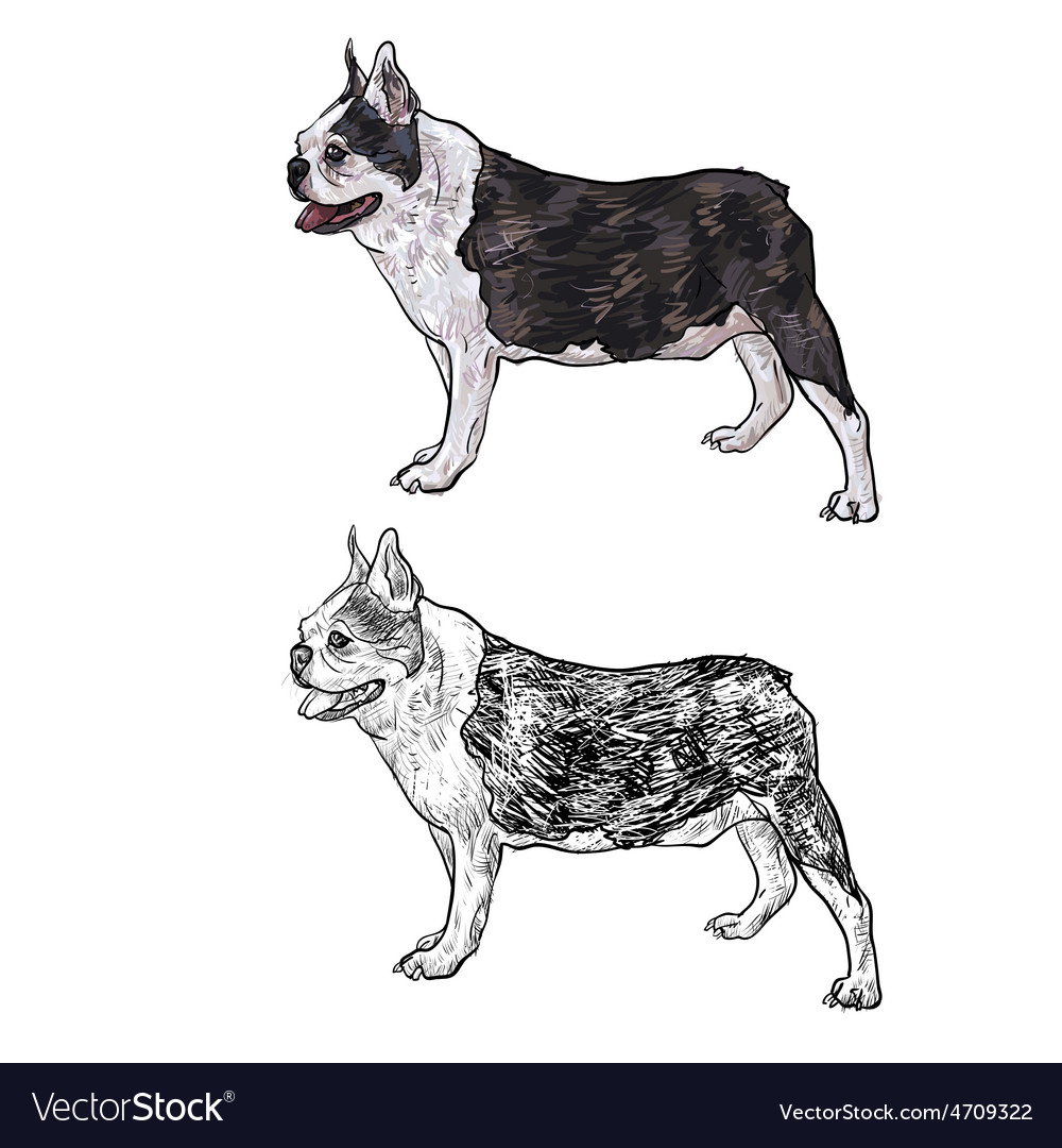 Drawing side of french bulldog vector | Price: 1 Credit (USD $1)
