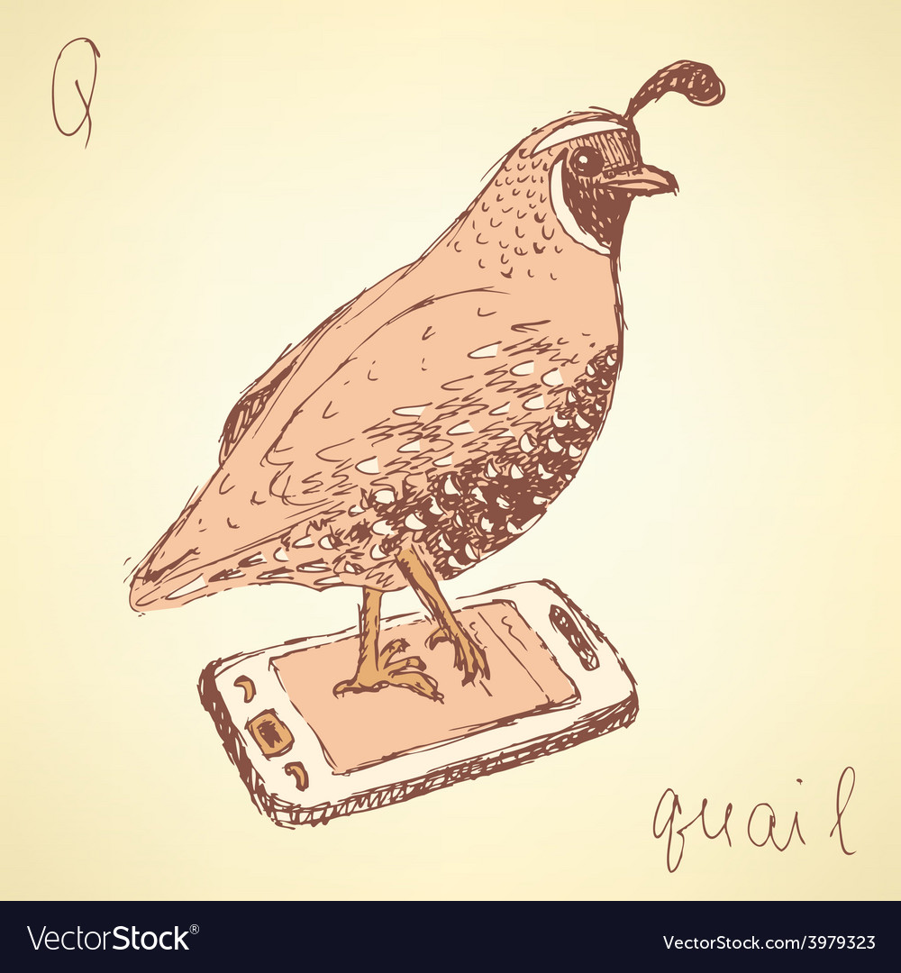 Sketch fancy quail in vintage style vector | Price: 1 Credit (USD $1)