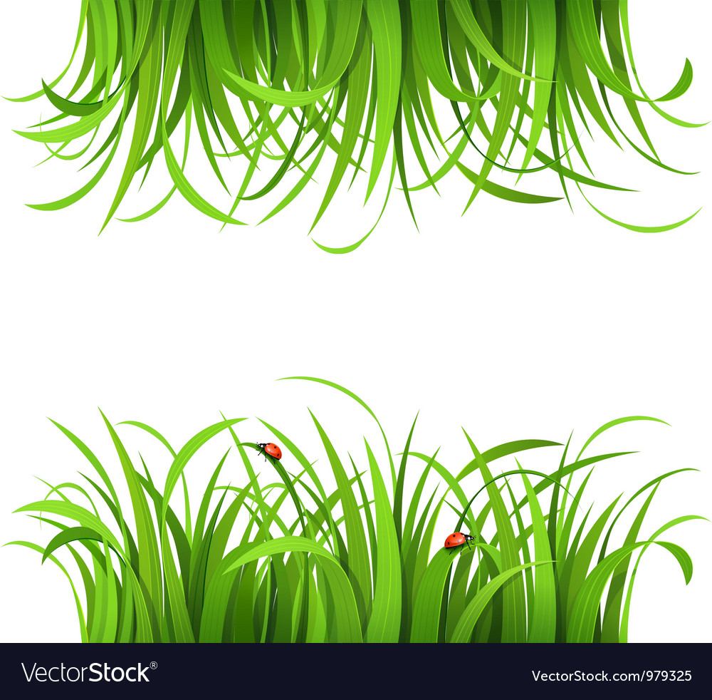 Green grass and ladybirds vector | Price: 1 Credit (USD $1)