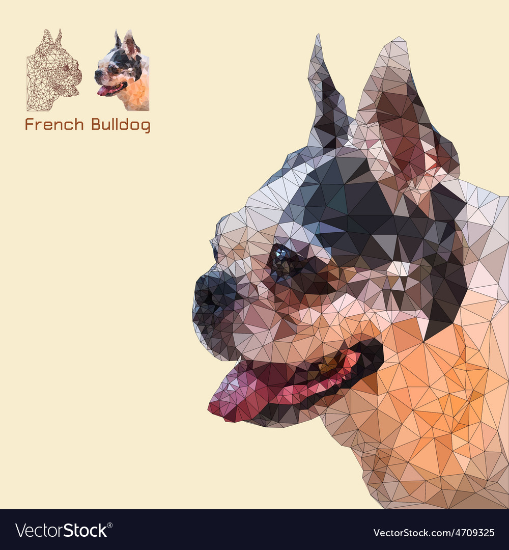 Low poly head french bulldog vector | Price: 1 Credit (USD $1)