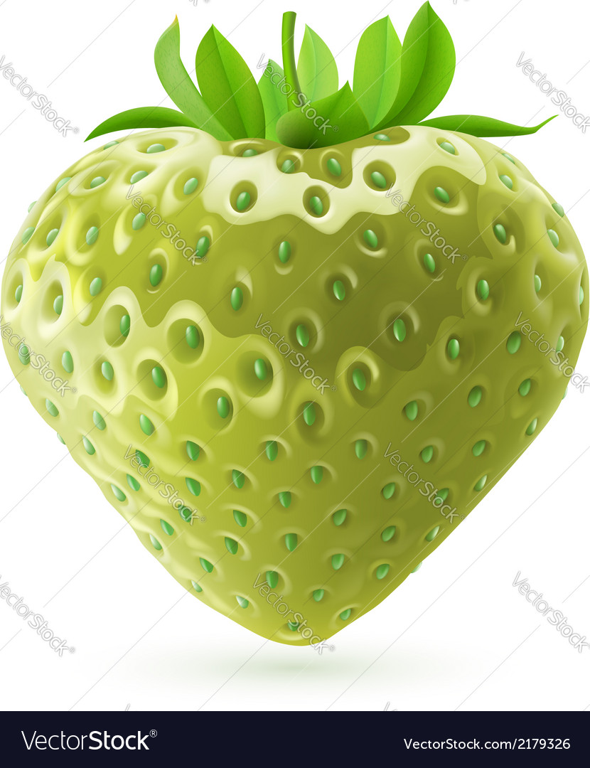 Unripe strawberry vector | Price: 1 Credit (USD $1)
