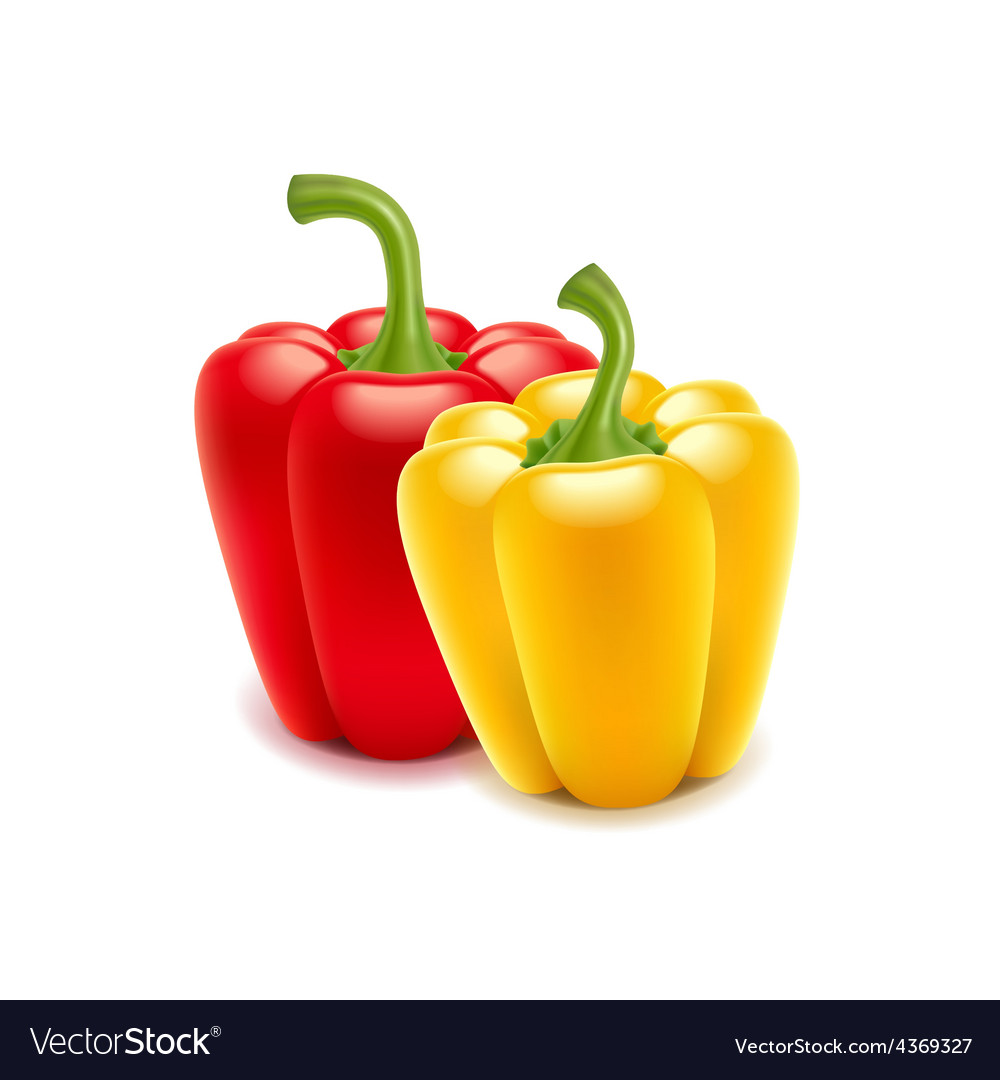 Sweet pepper isolated on white vector | Price: 3 Credit (USD $3)