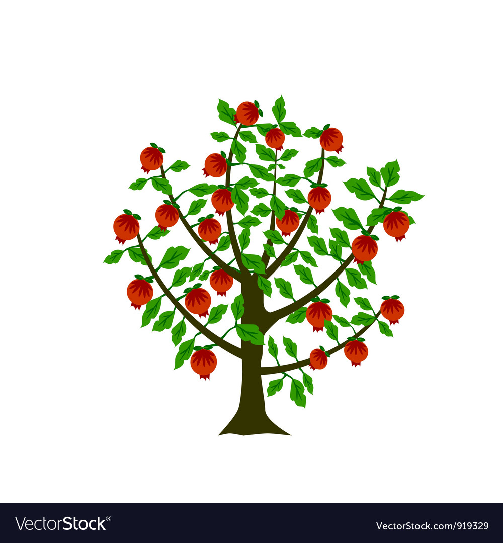 Pomegranate tree vector | Price: 1 Credit (USD $1)
