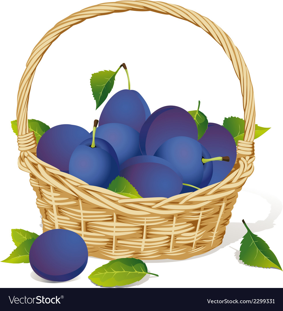 Basket with plums vector | Price: 1 Credit (USD $1)