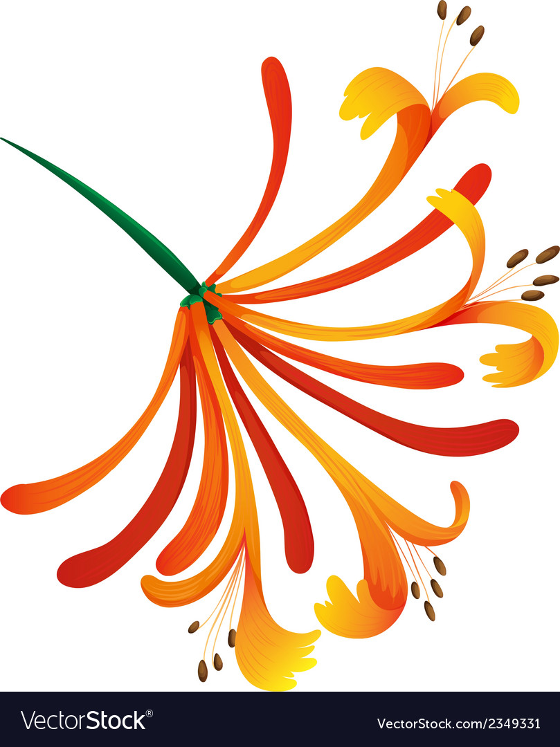 Mandarin honeysuckle vector | Price: 1 Credit (USD $1)