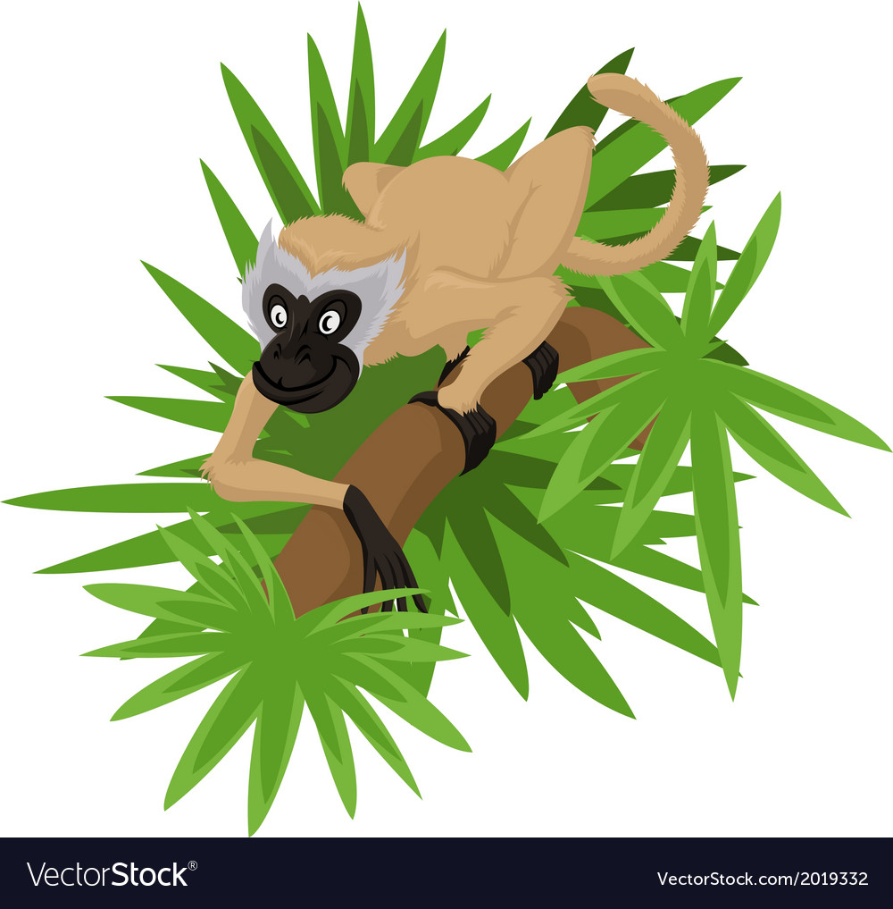 Marmoset vector | Price: 1 Credit (USD $1)