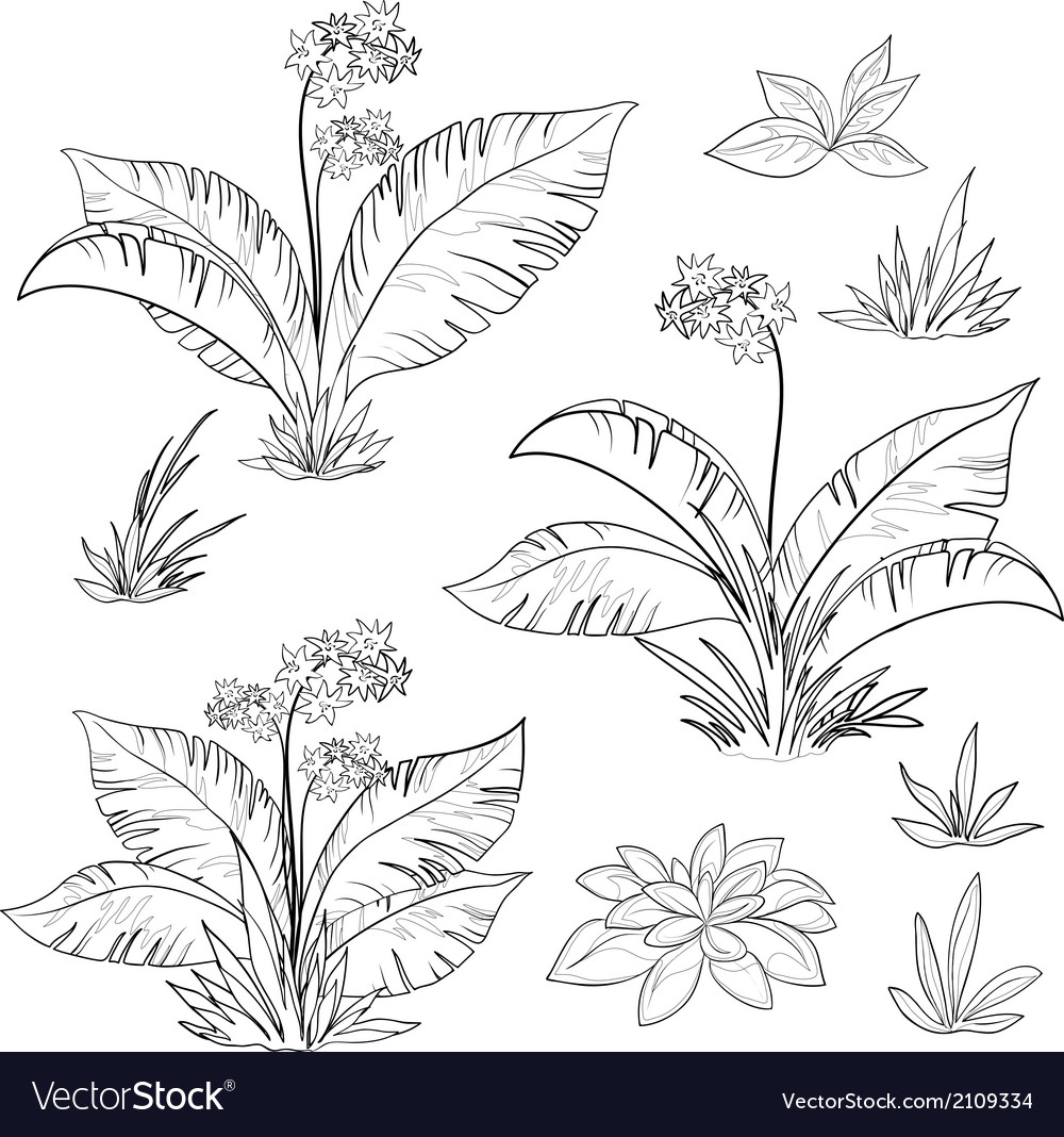 Flowers and grass set contours vector | Price: 1 Credit (USD $1)