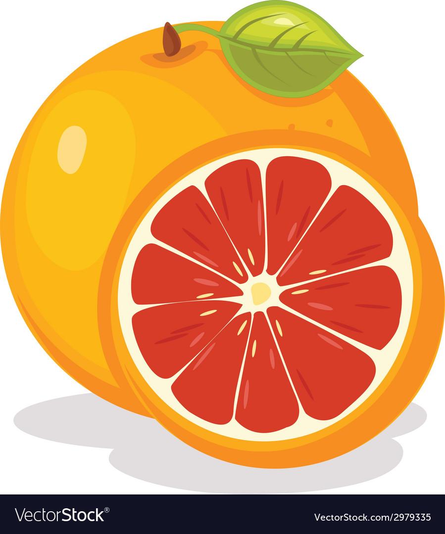 Grape fruit vector | Price: 1 Credit (USD $1)