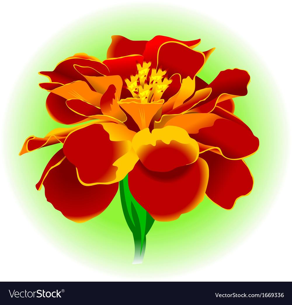 Flower vector   Price: 1 Credit (USD $1)