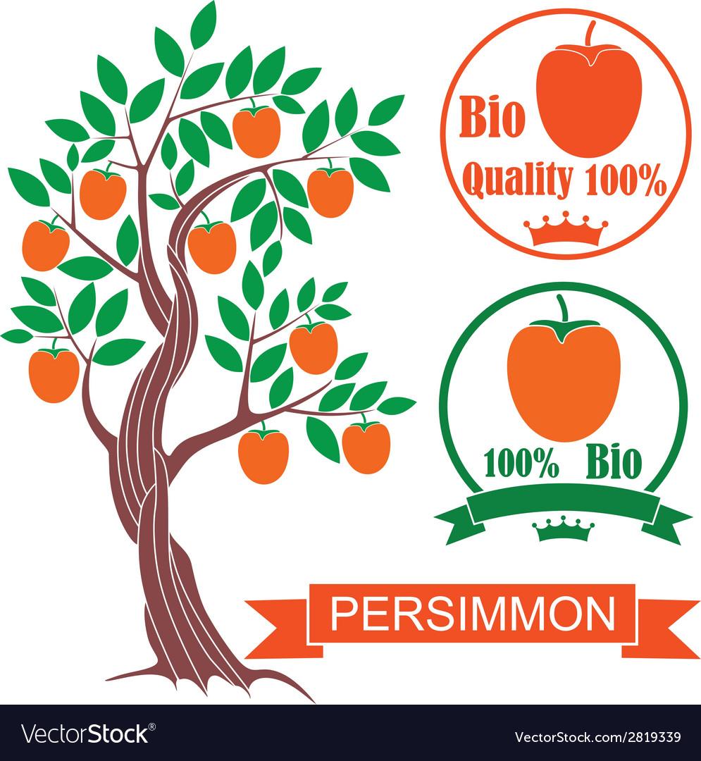 Persimmon vector   Price: 1 Credit (USD $1)