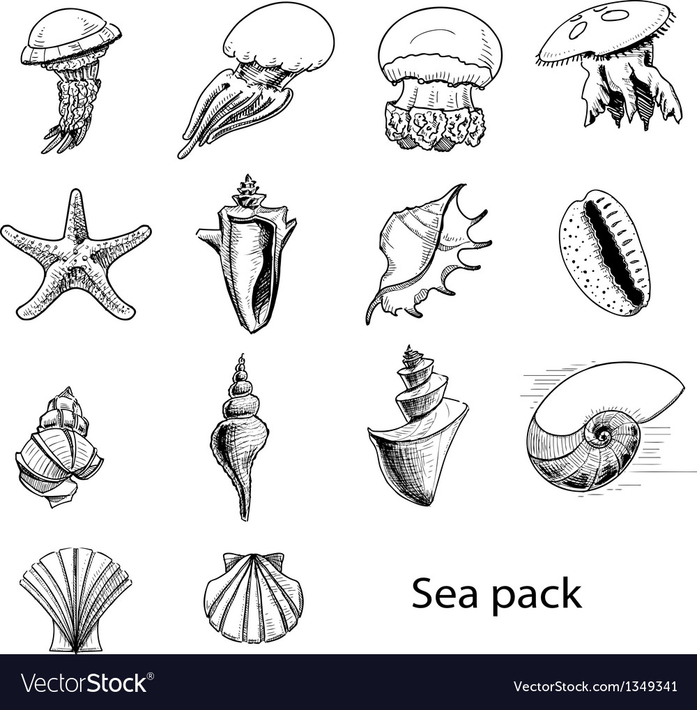 Collection of sea animals and shells vector | Price: 1 Credit (USD $1)