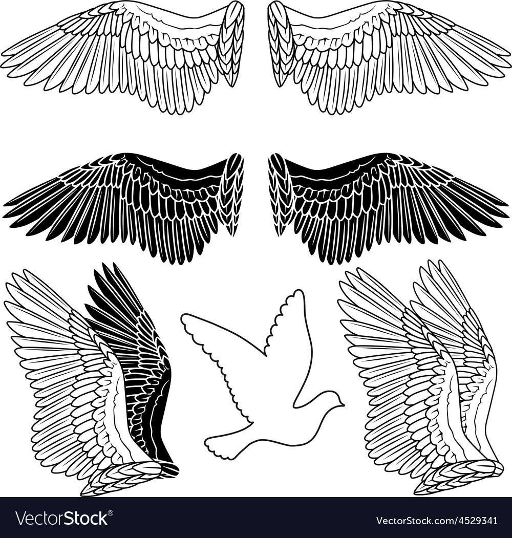 Dove bird wings set vector | Price: 1 Credit (USD $1)