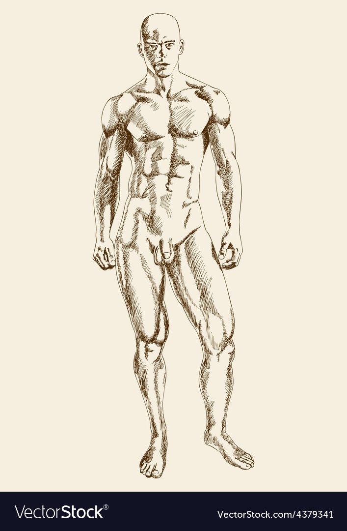 Muscular man body vector | Price: 1 Credit (USD $1)