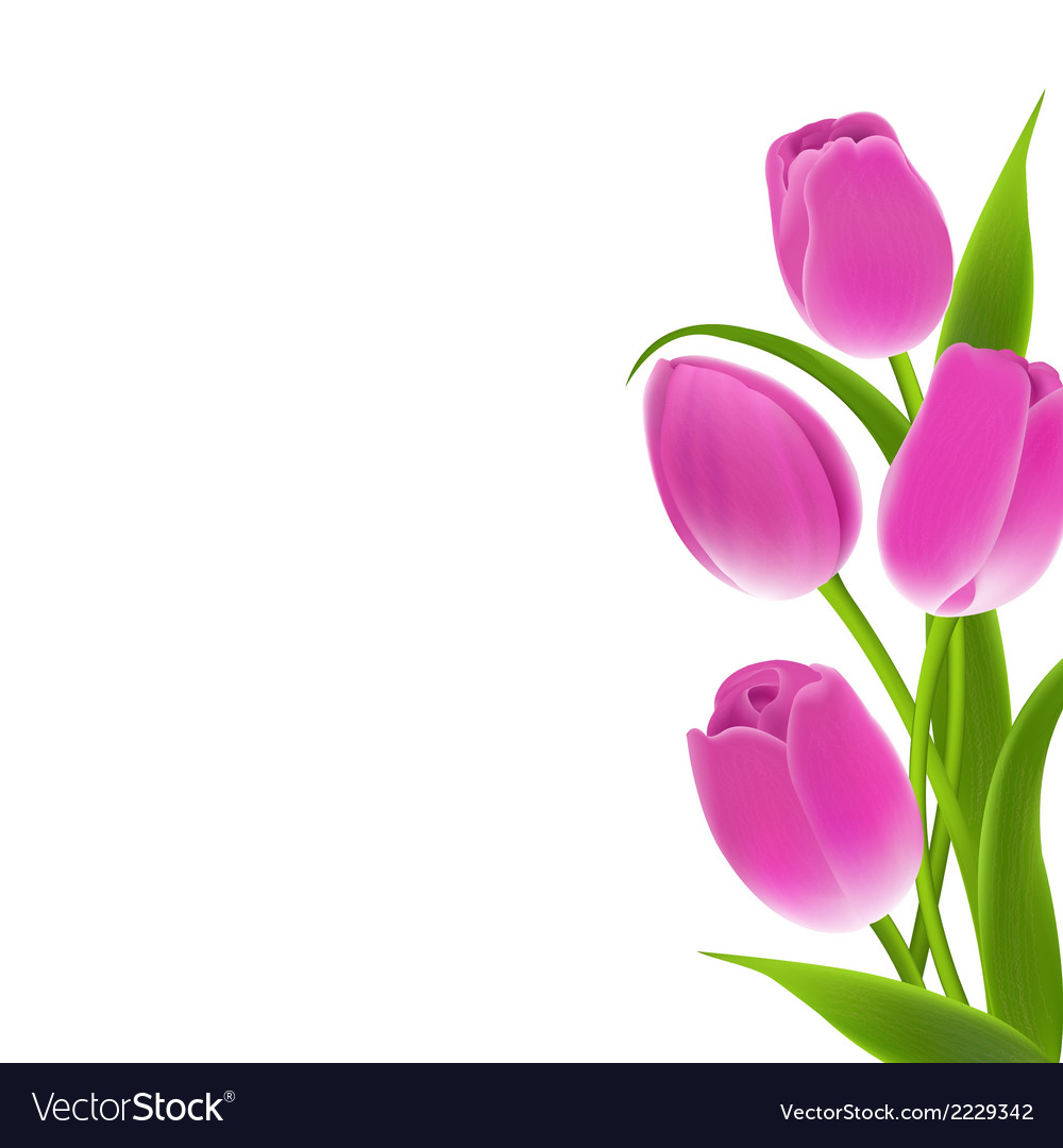 Border of pink tulips vector | Price: 1 Credit (USD $1)