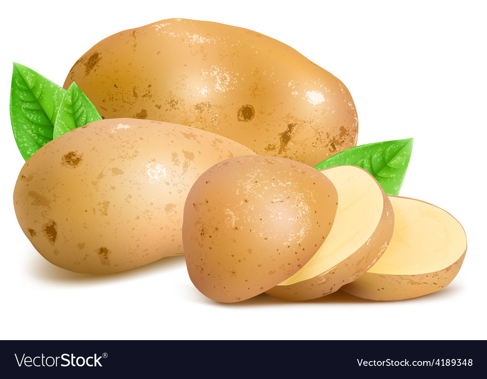 Potatoes with slices and leaves vector   Price: 3 Credit (USD $3)