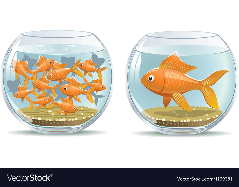 Aquarium comparison vector | Price: 5 Credit (USD $5)