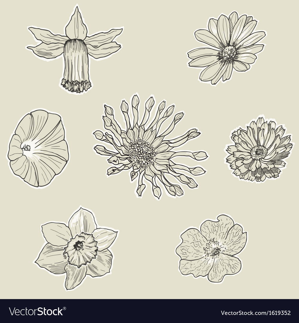 Set of seven graphic flowers vector | Price: 1 Credit (USD $1)
