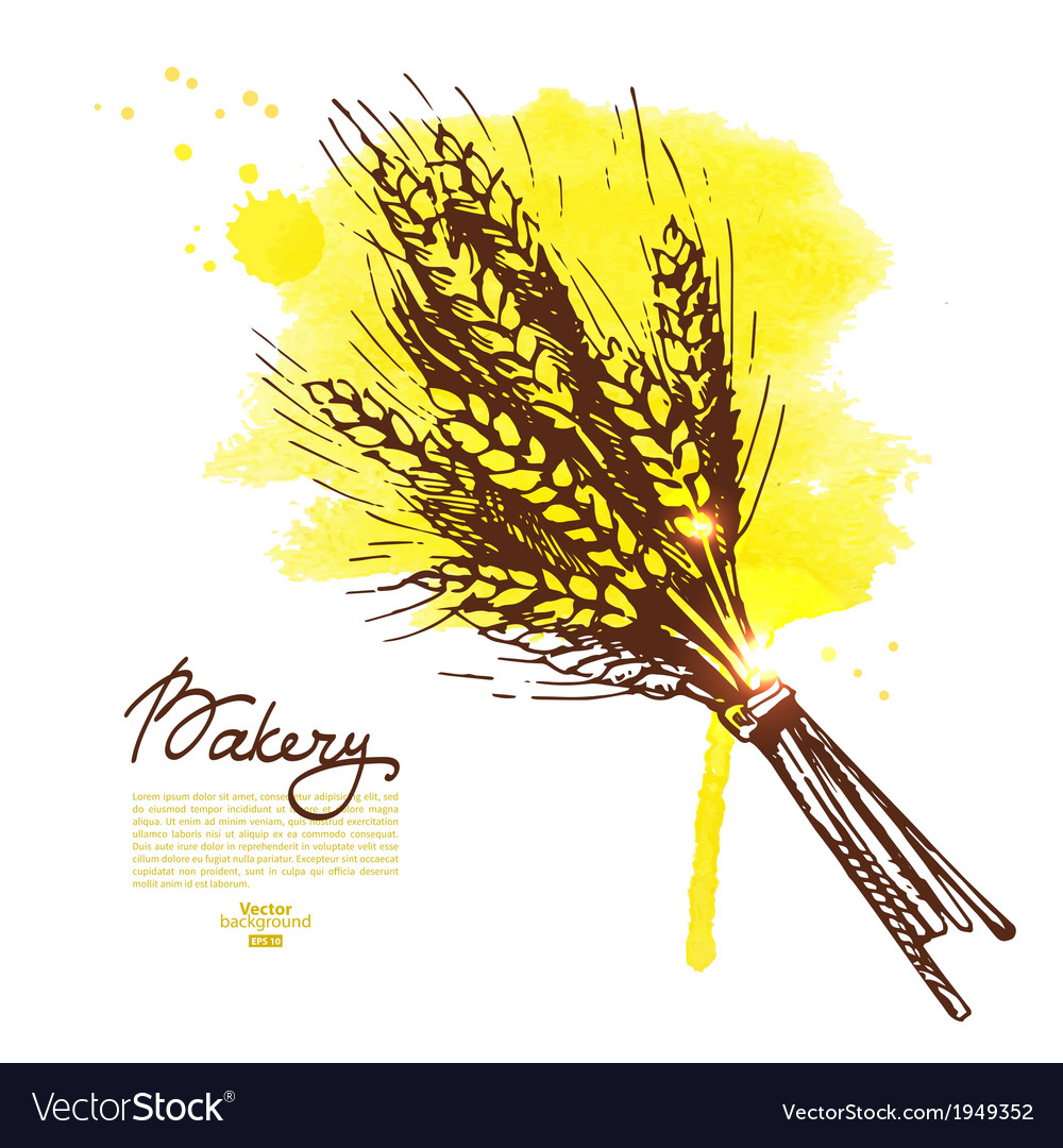 Watercolor wheat sketch background vector | Price: 1 Credit (USD $1)