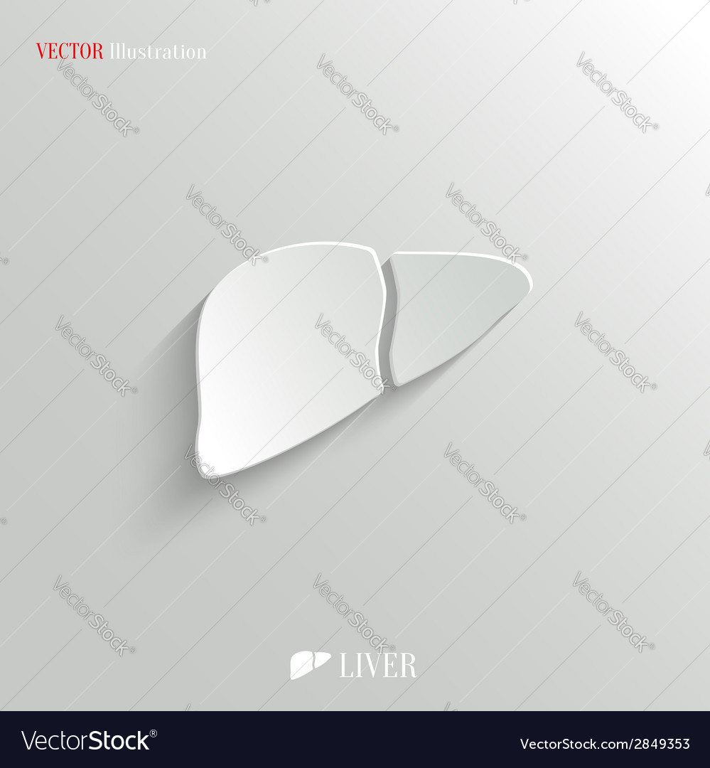 Liver icon - white app button vector | Price: 1 Credit (USD $1)