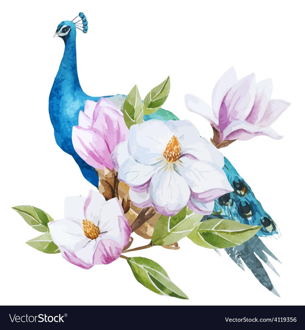 Magnolia and peacock vector   Price: 1 Credit (USD $1)