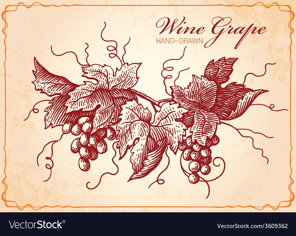 Wine grape vector | Price: 1 Credit (USD $1)