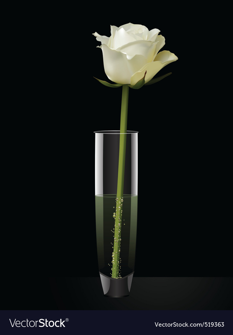White rose in a glass vase vector | Price: 3 Credit (USD $3)