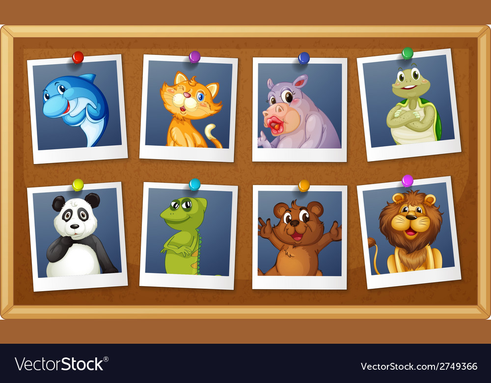 Photos of animals vector | Price: 1 Credit (USD $1)