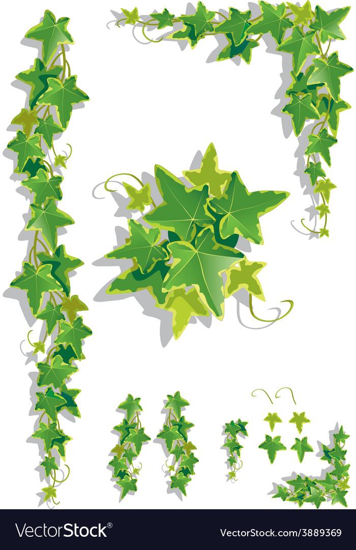 Ivy decorations vector | Price: 1 Credit (USD $1)