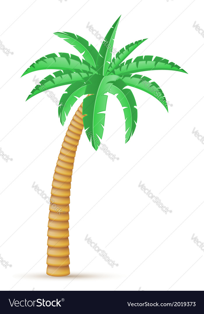 Palm 03 vector | Price: 1 Credit (USD $1)