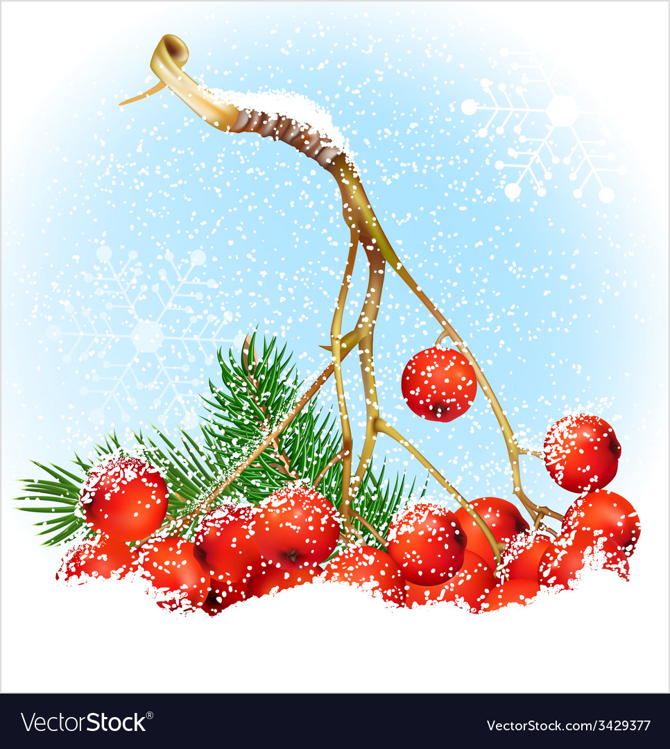 Christmas snow background with rowan vector | Price: 1 Credit (USD $1)
