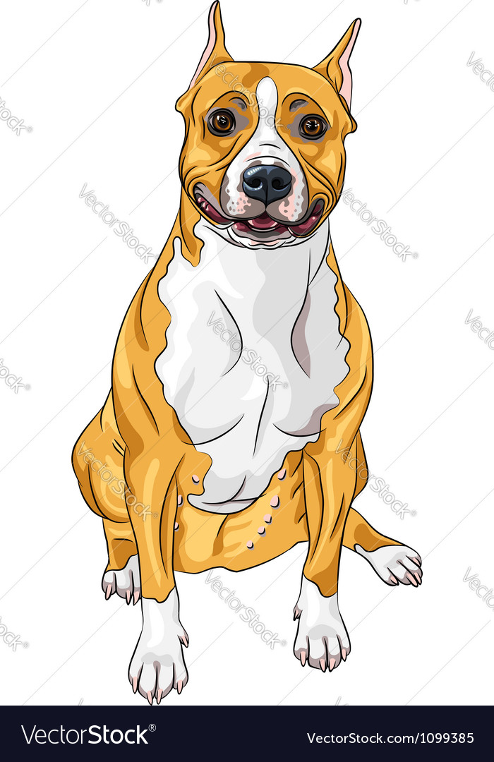 American staffordshire terrier vector | Price: 3 Credit (USD $3)