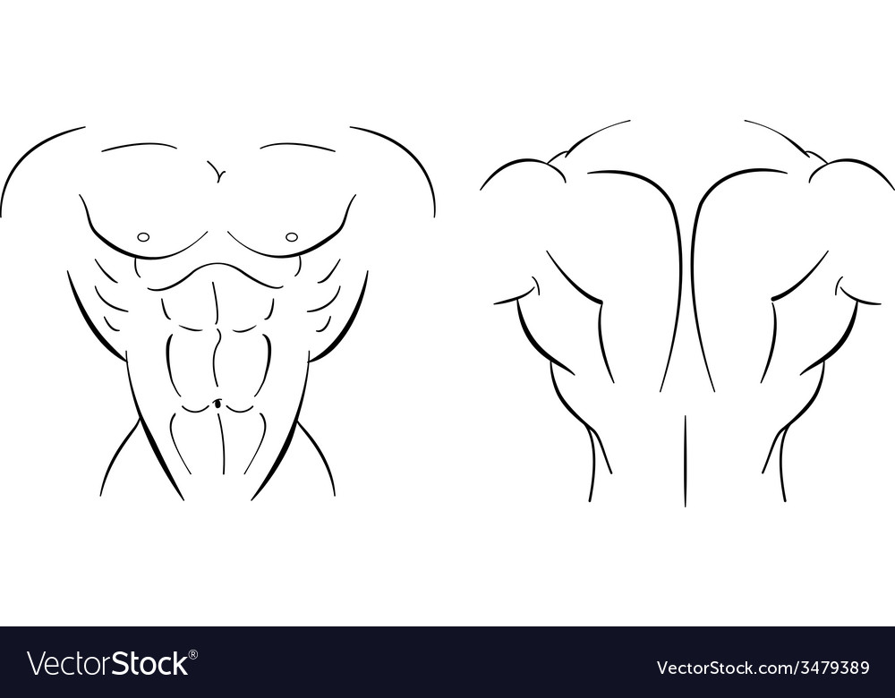 Bodybuilder torso line-art vector | Price: 1 Credit (USD $1)